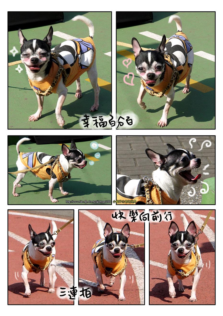201012dog_7.jpg